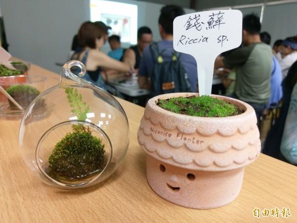 集集特生中心舉辦「蘚而易見」苔蘚特展,並有苔蘚盆栽DIY,可愛又療癒超受歡迎。(記者劉濱銓攝)