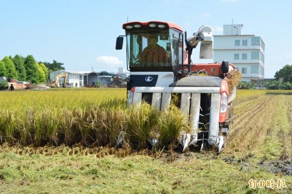 適逢一期作收割季節,卻遇到強颱瑪莉亞來攪局,彰化縣各鄉鎮都出現稻農忙搶收,代割業者忙得不可開交。(記者湯世名攝)
