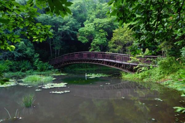 奧萬大颱風過後風景如昔,南投林管處宣布12日重新開園。(南投林管處提供)