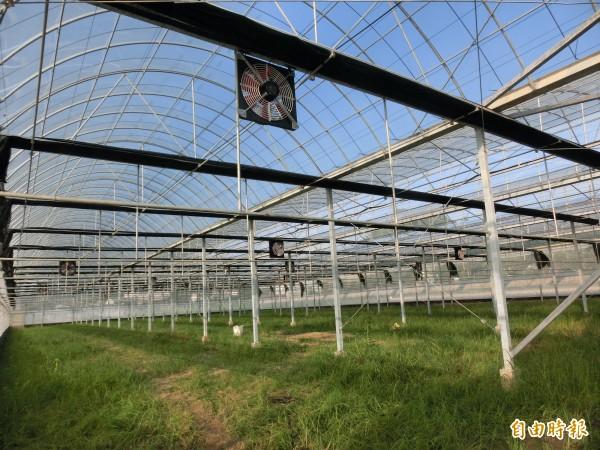 高雄市農業局全國首創聘請專業督工,協助農民搭建抗颱溫室。(記者陳文嬋攝)