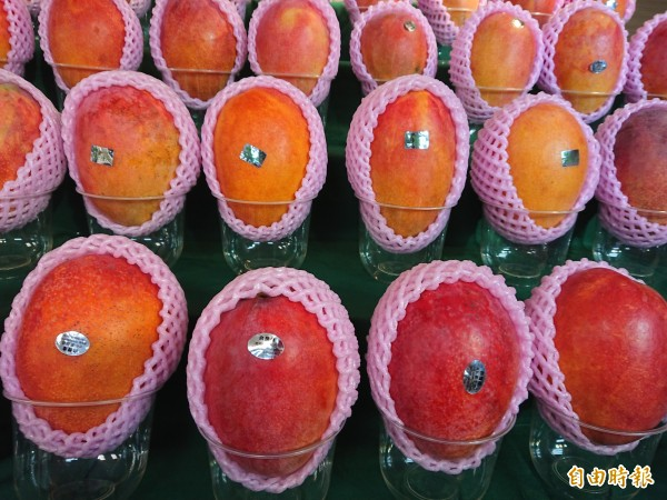 台南優質芒果直銷日本,打進日本消費市場。(記者洪瑞琴攝)