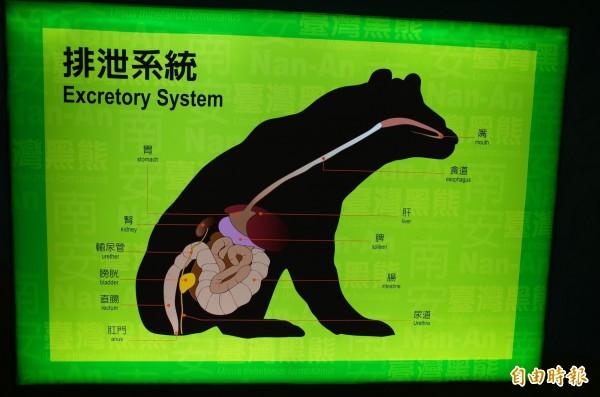 玉山國家公園南安遊客中心的黑熊展示教育區,明明包含黑熊上下消化道系統的介紹圖片,標題卻被窄化成只是「排泄系統」。(記者花孟璟攝)