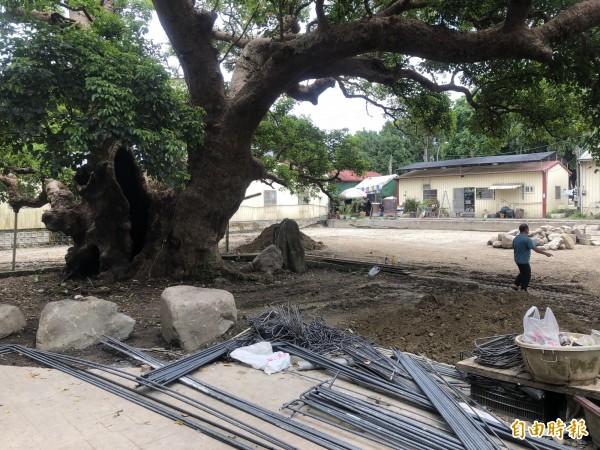 茄苳神木樹冠下的廁所工程已停工並拆除相關的鋼筋設施。(記者佟振國攝)