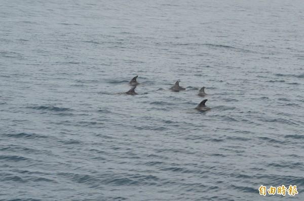 成功外海鯨豚發現率高。(記者張存薇攝)