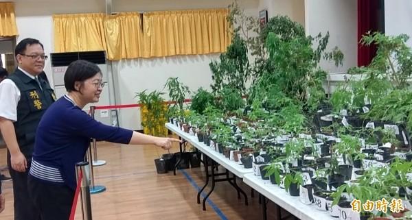 南投地檢署檢察長楊秀蘭(右)等人,就查扣的大麻案對外說明。(記者謝介裕攝)