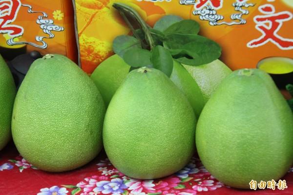 新竹縣寶山鄉的柚子要成熟了,今年將第3度跟創世基金會新竹分院合作,透過這樣的產銷,幫該分院安養植物人,也幫寶山農民「完銷」有個好年冬。(記者黃美珠攝)