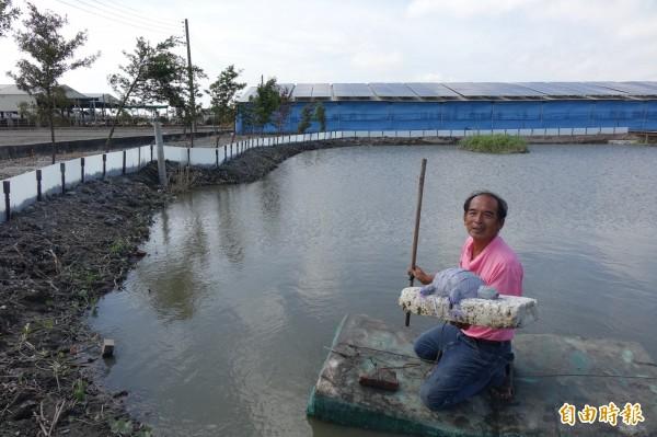 彰化縣福興鄉福寶村打造「龜公園」,因為水池有許多烏龜,長黃耀輝還做了一隻人造烏龜。(記者劉曉欣攝)