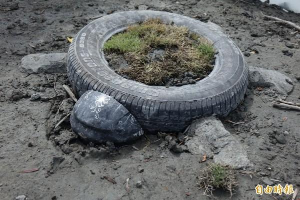 用廢輪胎當龜身,安全帽充當烏龜的頭,就成為特色花盆。(記者劉曉欣攝)