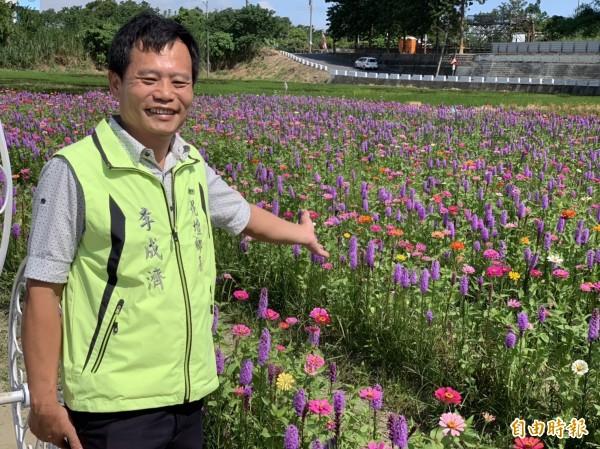 花壇鄉三春老樹的紫色麒麟菊盛開,鄉長李成濟歡迎遊客前來賞花。(記者湯世名攝)