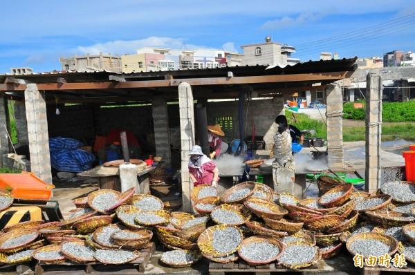 澎湖赤崁丁香魚品質優良,但受到外來丁香衝擊大不如前。(記者劉禹慶攝)