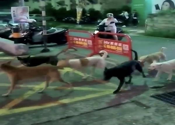 彰化市曉陽路昨晚出現整群流浪狗,讓民眾看到直呼「恐怖」,紛紛走避。(民眾提供)