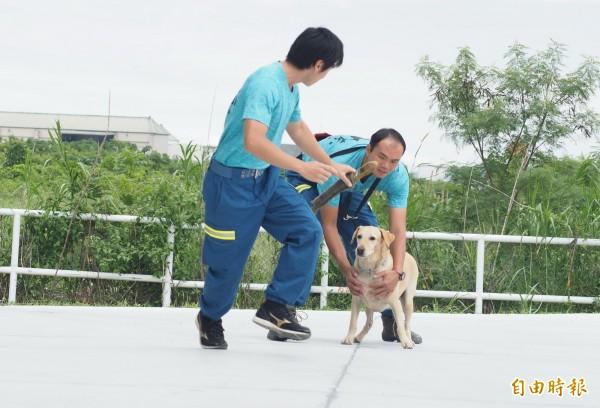 「健康」是台東縣消防局第一批搜救犬。(記者王秀亭攝)