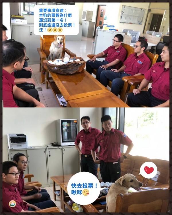 為了幫搜救犬「健康」催票,台東縣消防局人員製作KUSO照片。(台東縣消防局提供)