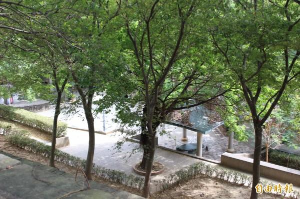 民代建議利用天空步道四周的樹木,繫上麻繩設攀登設施。(記者張聰秋攝)
