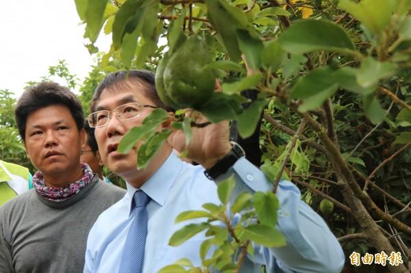 黃偉哲今到台南後壁拜訪友善環境耕種農友,進一步規劃台南未來農業藍圖。(記者萬于甄攝)