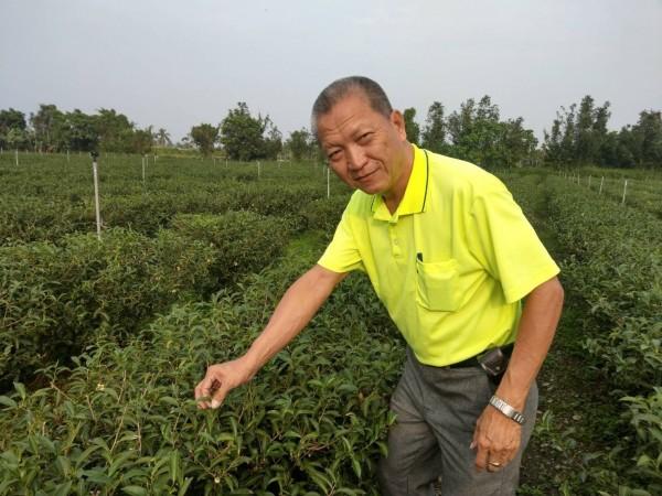 郭榮冠在高樹鄉泰山村種植平地茶。(圖由農糧署南區分署提供)