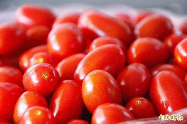 太保市是台灣小果番茄重要產地。(記者林宜樟攝)