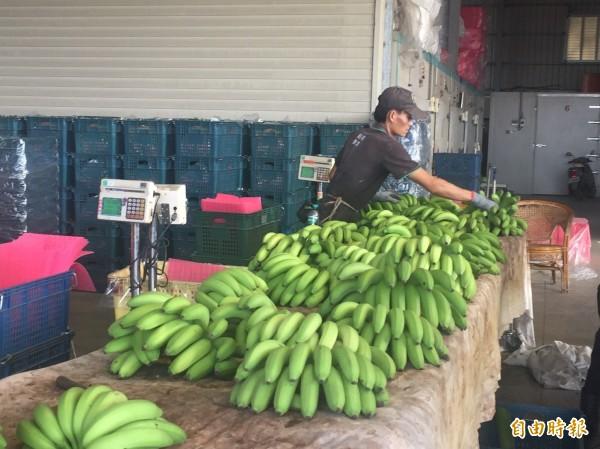 台灣香蕉銷日供不應求,日本要追加訂單。(記者詹士弘攝)