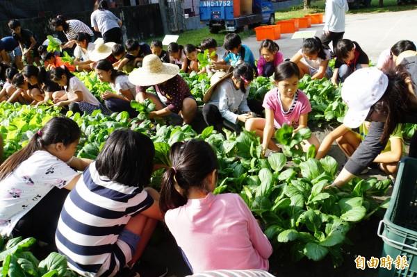 莿桐國小食農教育,蔬菜自種自採自食。(記者詹士弘攝)