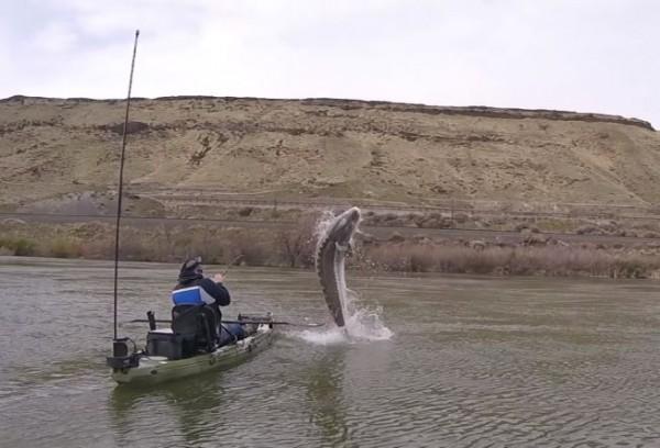 將近2.5米長的巨大鱘龍魚出水點就在船邊。(擷取自YouTube)