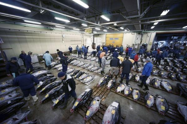 日本知名的築地市場年底將要遷建,今天(5日)舉行舊市場最後一次的新年鮪魚競標活動。(美聯社)