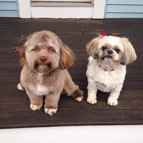 左邊的Yogi,有悲傷眼神。(圖翻攝自9gag)