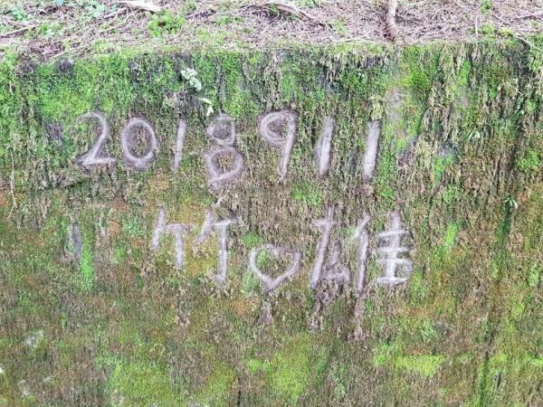 民眾在臉書上指出,有情侶在大雪山神木區佈滿青苔的石磚上刻下相愛的年份與日期。(圖擷取自爆料公社)