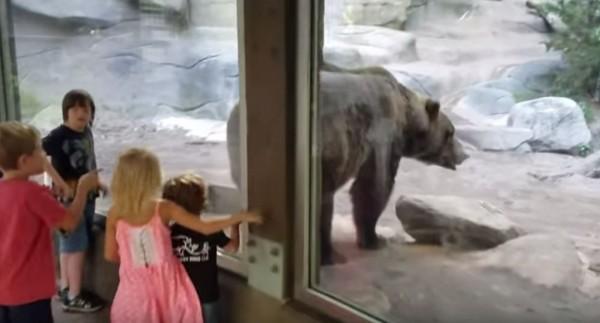 大灰熊毫無顧忌地朝著孩子們排便。(圖擷取自Youtube)