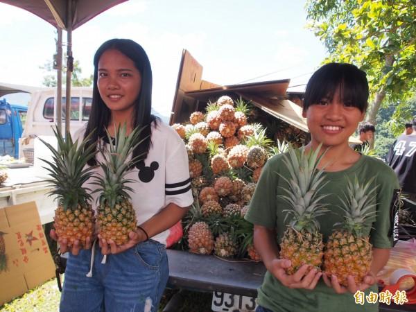 台灣鳳梨品質優良,極具外銷潛力,農委會表示,明年屏東的農產品包裝廠完工後,可望將台灣鳳梨大量出口到日本。(資料照,記者王秀亭攝)