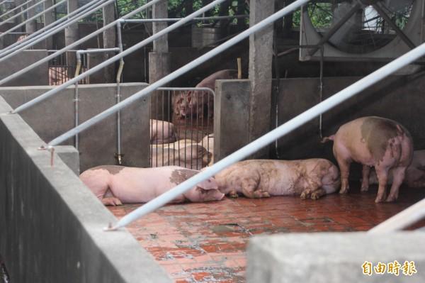 佳冬鄉賴家村有一處養豬場,改由國際大廠接手後,擴張在養頭數,但卻未相對應增加除臭設備,一到晚上豬屎臭味瀰漫全村,民眾難以忍受。(記者陳彥廷攝)