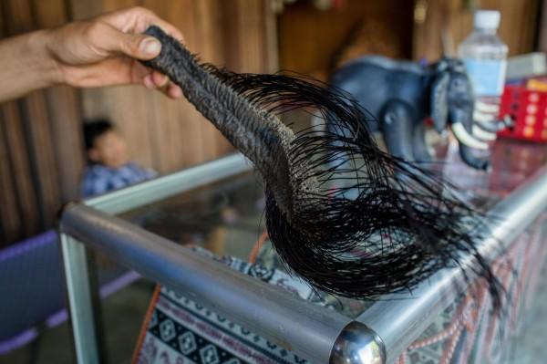 在越南的民间传说中,配戴象尾毛是好运、平安和祝福的象徵。(法新社)