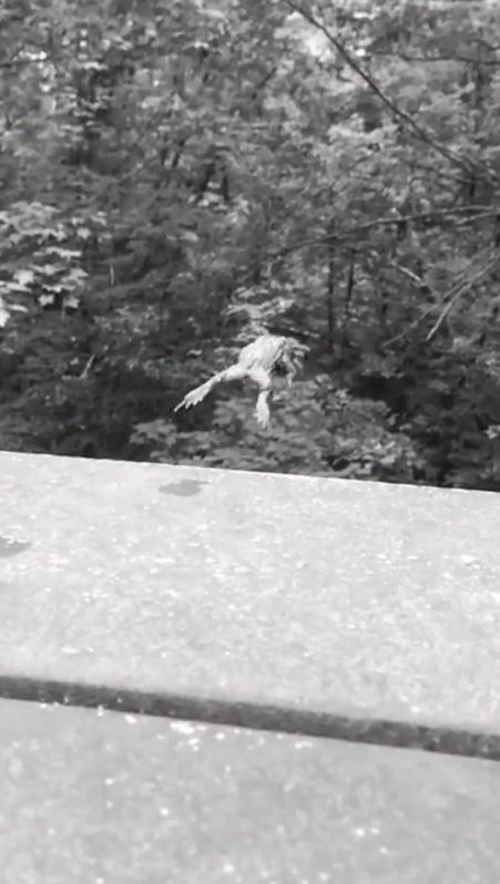 網友目擊到一隻蟾蜍原本趴坐在高台旁,卻突然跳下樓。(圖擷取臉書粉專「Trending Karon 2.0」)