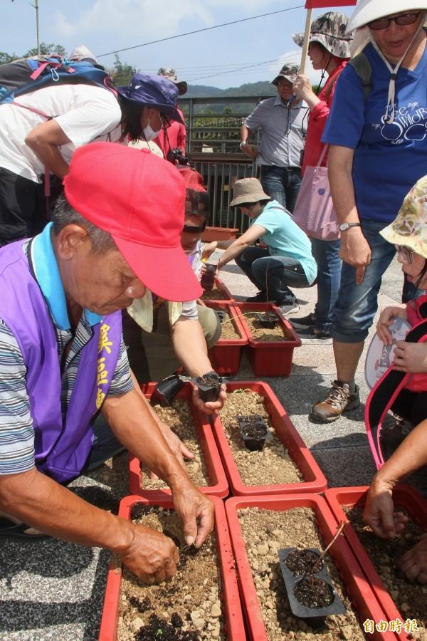 平溪社區志工在花台種下台灣原生特有種豔紅鹿子百合幼苗。(記者林欣漢攝)