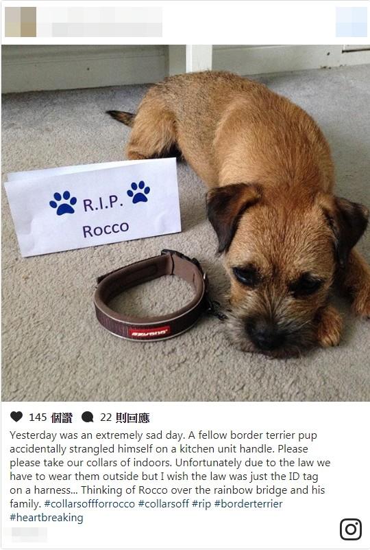 网民们纷纷在社群网站Instagram上以#collarsoffforrocco为标签,发布自己悼念洛可以及呼吁在家中卸下宠物项圈的照片。(图片撷取自新闻网站「METRO」,http://metro.co.uk)