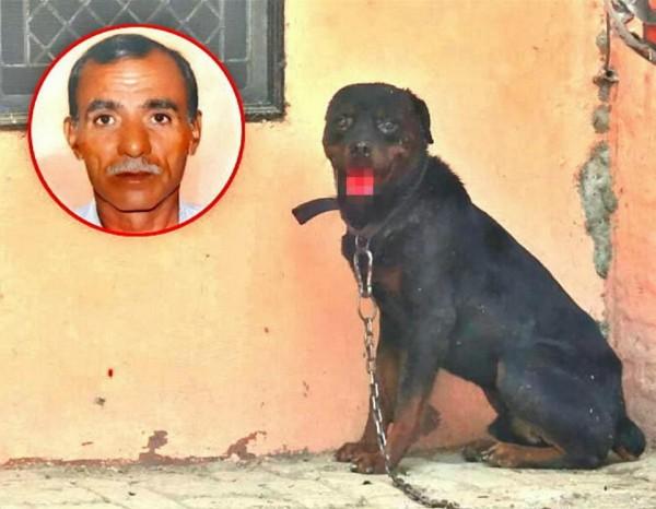 圖為釀禍的洛威拿犬「老虎」。(圖翻攝自《太陽報》)