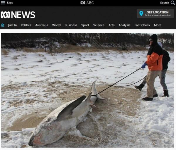 被冰凍的沙魚狀似「天然冰棒鯊」。(圖片擷取自ABCNews網站)