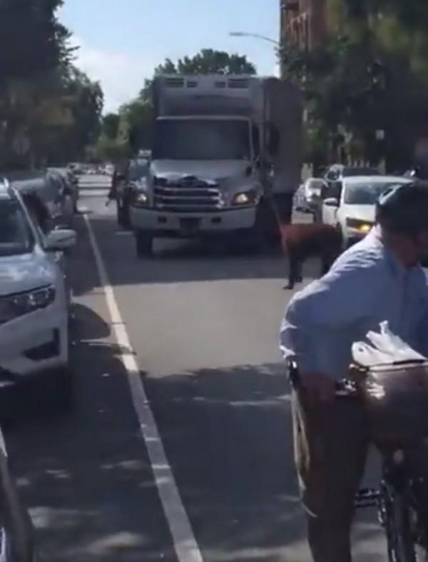美国纽约布鲁克林区近日竟有草泥马大摇大摆地在马路上游荡。(图撷取自「jacob kornbluh」推特)