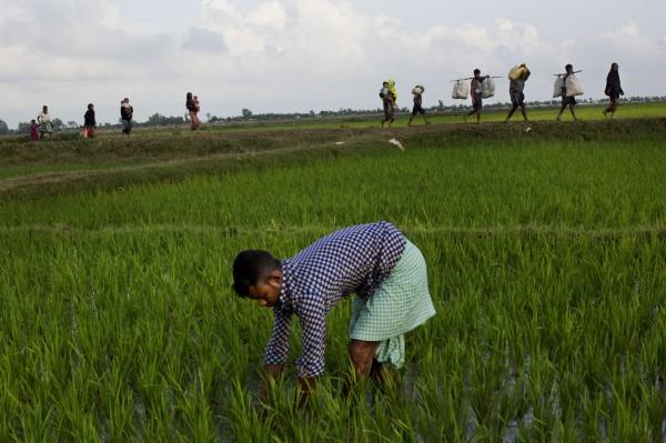 许多罗兴亚人纷纷逃到孟加拉。(美联社)