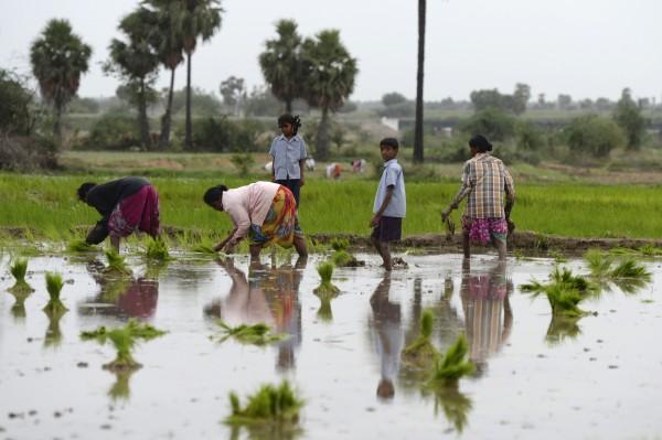 受到乾旱影響,當地農民施作農作物主要依靠井水,但該地區的地下水已逐漸減少。(法新社)