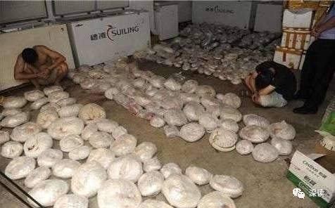 圖為中國警方查獲死體的穿山甲。(圖擷取自中國新浪網)