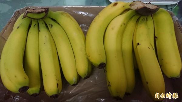 台灣雖然是水果王國,但今年香蕉卻出現產銷失衡。(資料照)