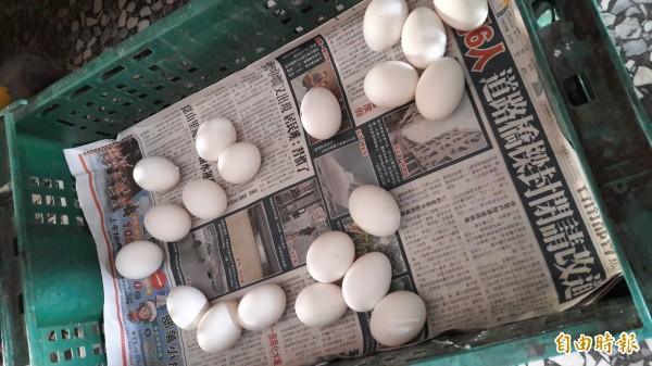 圖為放在塑膠箱中的雞蛋,示意圖。(資料照,記者林宜樟攝)