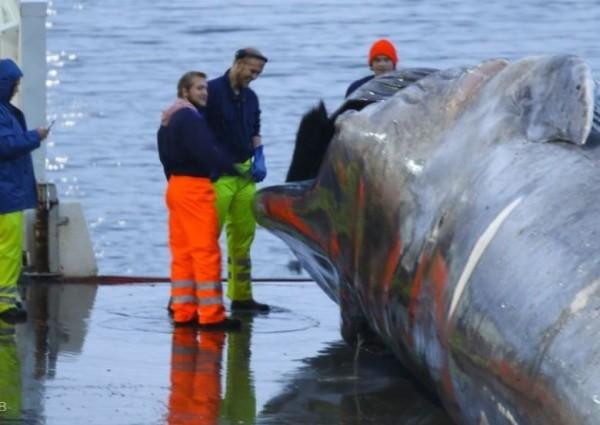 船員們笑容滿面,一頭藍鯨不知道能讓他們入袋多少錢。(圖擷自Sea Sheperd)