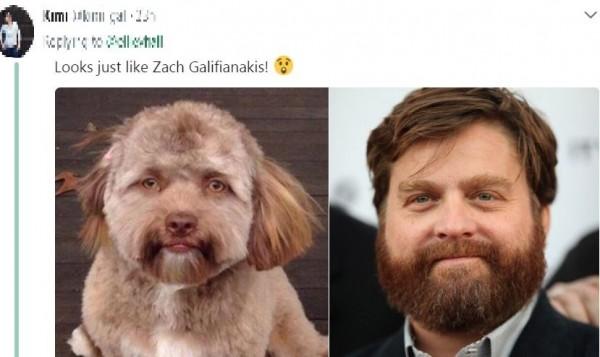 有網友認為牠長得像影星查克葛里芬納奇(Zach Galifianakis)。(圖翻攝自推特)