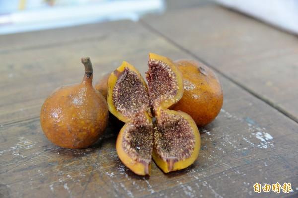 大果藤榕的果實經榕果小蜂授粉,也能洗出果膠、製作愛玉。以大果藤榕果實製作的愛玉色澤較深,口感則偏水嫩。(記者許麗娟攝)