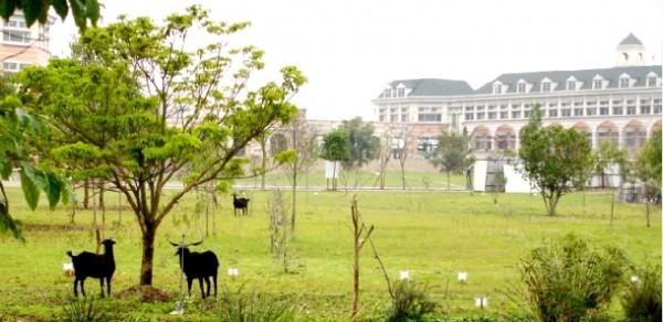 維多利亞雙語學校。(照片擷取自學校官網)
