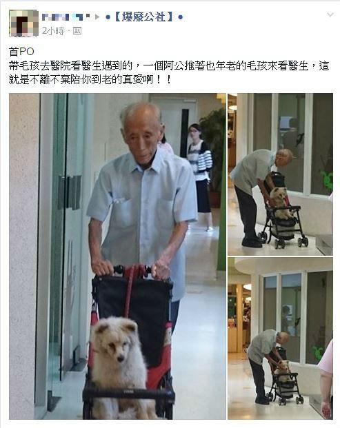 網友認為「這就是不離不棄陪你到老的真愛」。(圖擷自《爆廢公社》)
