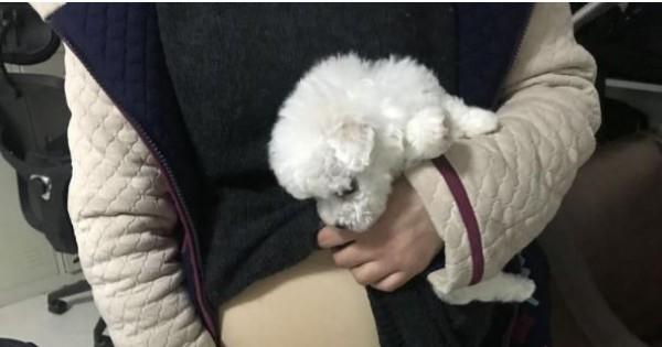 中國湖北武漢一名女大生,想把愛犬一同帶回老家,竟異想天開將狗藏在假孕肚內,企圖瞞天過海闖關上機。(圖翻攝自《楚天都市報》)
