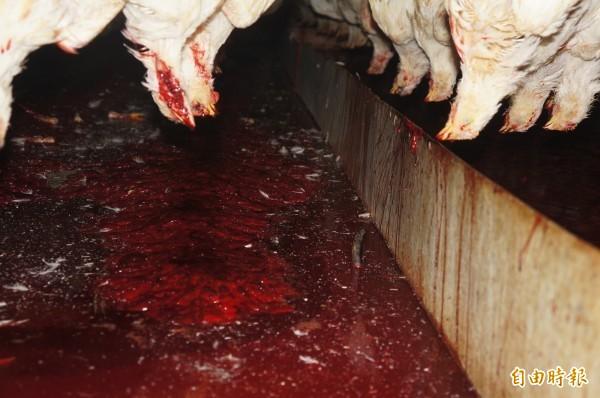 檢警到双鵬蒐購雞血的屠宰場,發現集血區羽毛及糞便摻雜其中,十分不衛生。(記者李忠憲翻攝)
