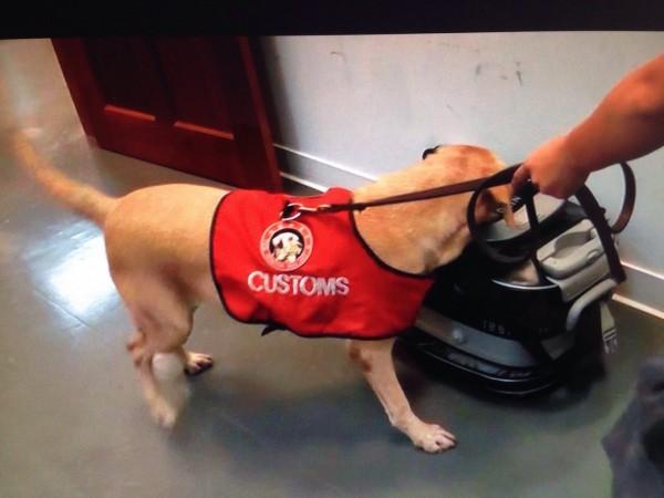 海關人員動用緝毒犬來嗅聞毒品味道,加強毒品查緝。(記者姚岳宏翻攝)
